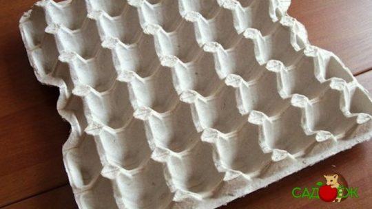 Применение бумажных лотков для яиц в огороде