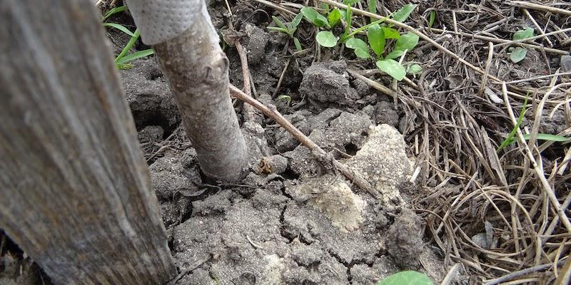 Как и зачем использовать диатомит в огороде?