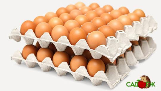 Бумажные лотки из-под яиц в огороде