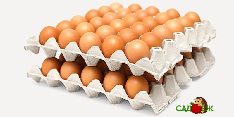 Полезное применение бумажных лотков от яиц в огороде: часть 2