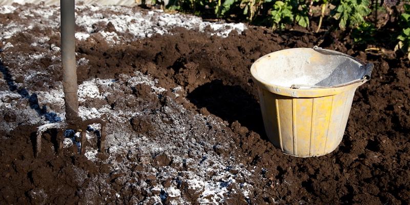 Как раскислить почву на огороде осенью?