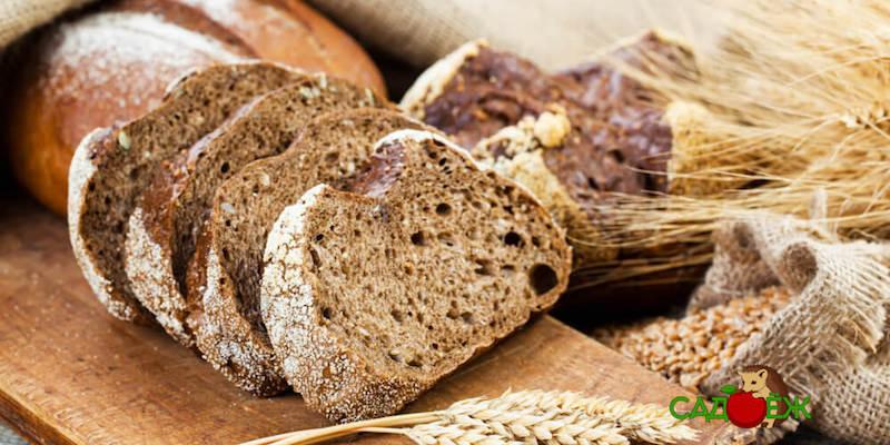 Полезное применение старого черствого хлеба в огороде