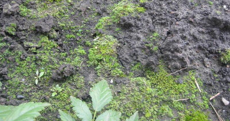 Почва покрылась мхом