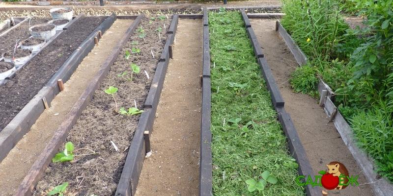 Как сделать садовые дорожки на даче своими руками из подручных средств?