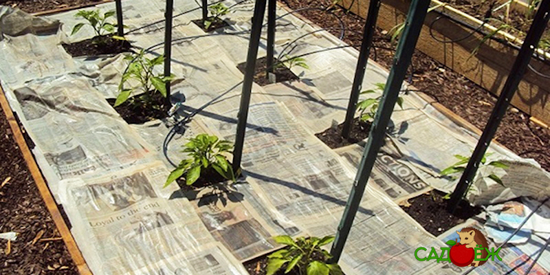 Как использовать газеты в огороде