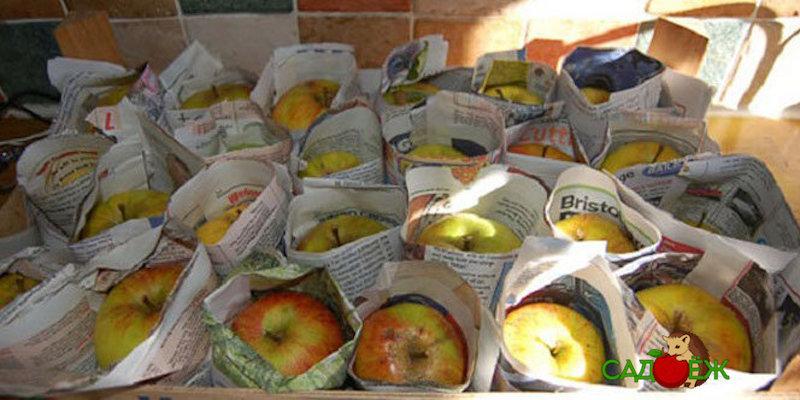 Можно ли хранить овощи, заворачивая их в газету?
