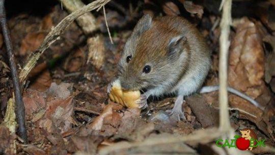 Как избавиться от мышей в компостной куче