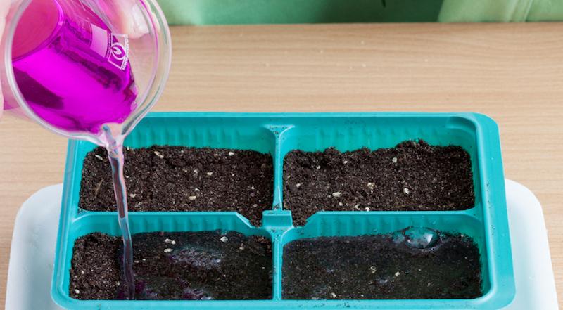 посев калибрахоа на рассаду