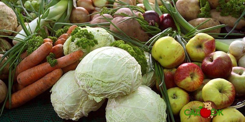 Как хранить овощи дома, если нет погреба?