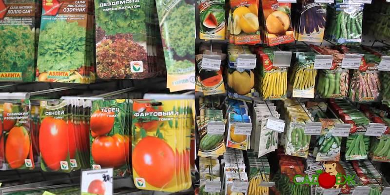 Как правильно выбрать семена и какие купить?