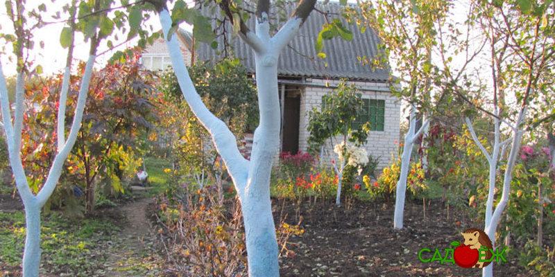 Обязательный уход за деревьями осенью