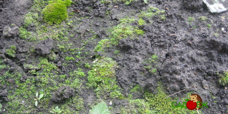Почему зеленеет почва в теплице и что с этим делать?