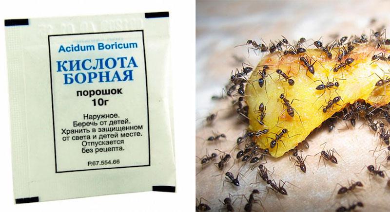 Как использовать борную кислоту в огороде и против муравьев