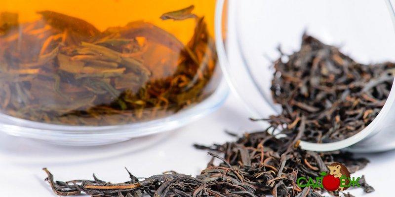 Как и куда использовать спитой чай и кофе в огороде?