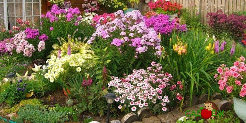 Неприхотливые цветы многолетники