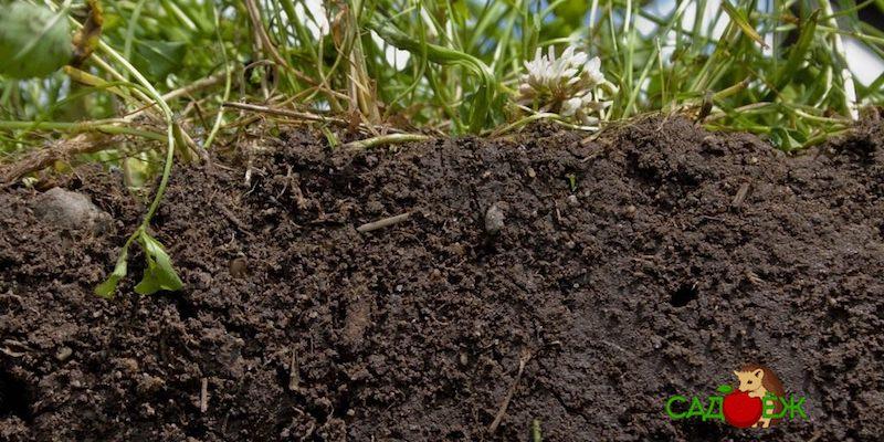 Чем раскислить почву весной, летом и осенью?