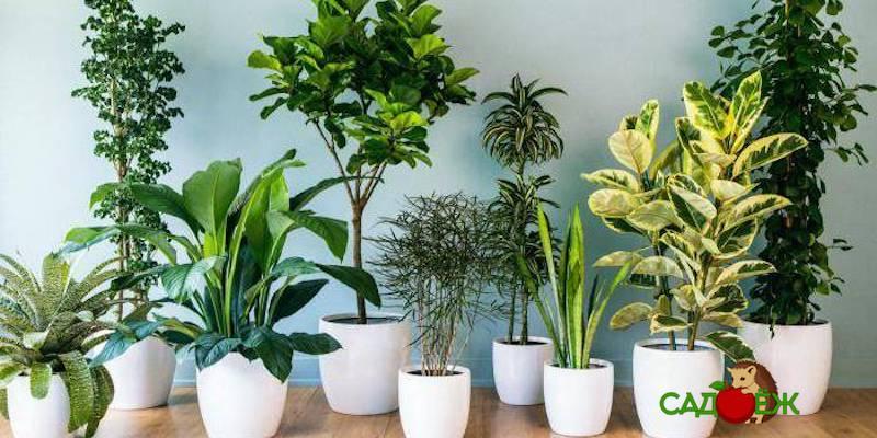 Растения, лучше всего очищающие воздух