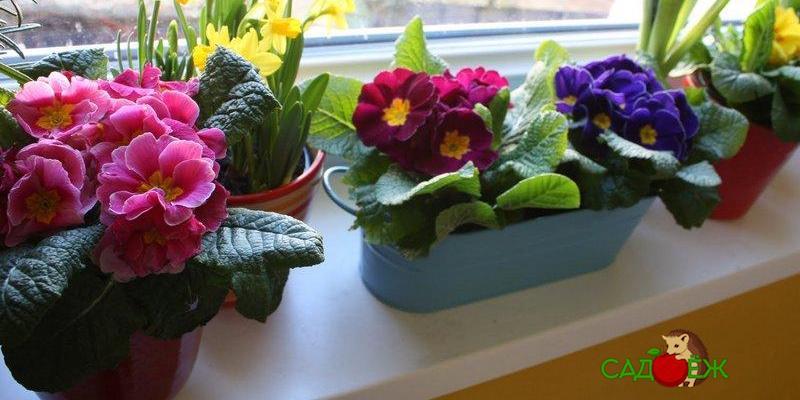 Как расставить комнатные цветы?