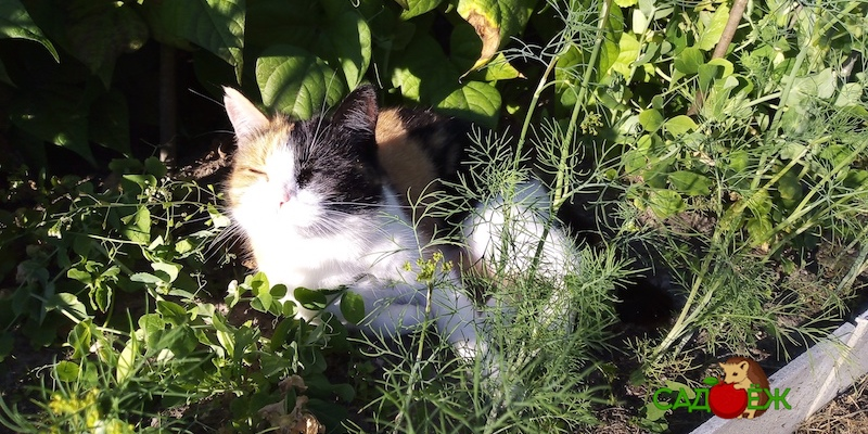 Как отвадить кошек топтать грядки