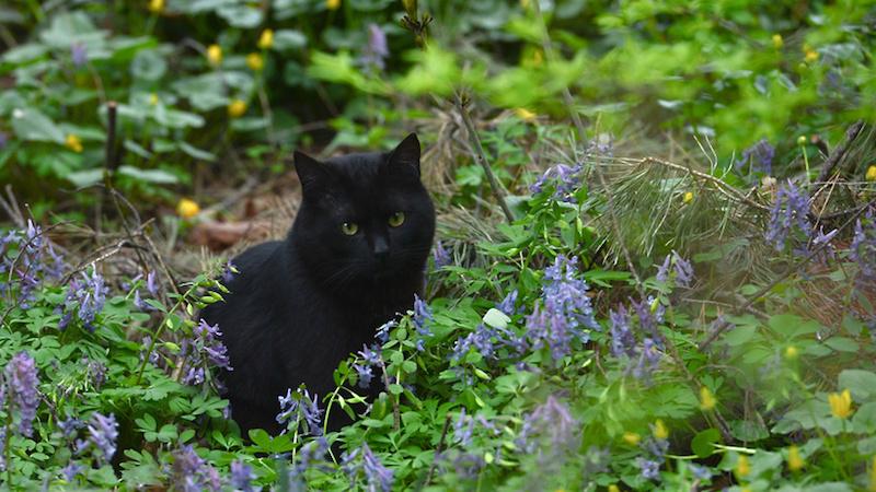 Кошка в огороде