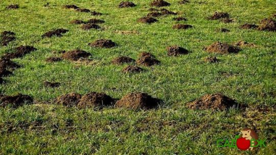 Применение кротовой земли в огороде