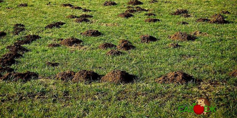 Полезное применение кротовой земли