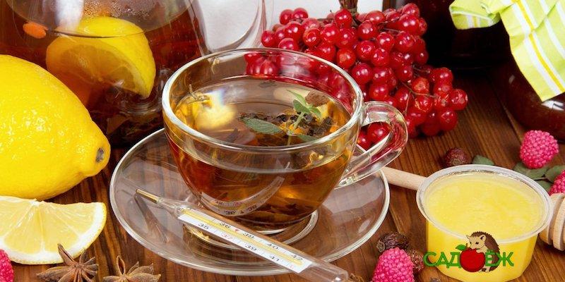 Народные рецепты от гриппа и простуды