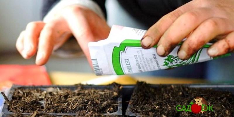 Как подготовить семена к посадке на рассаду