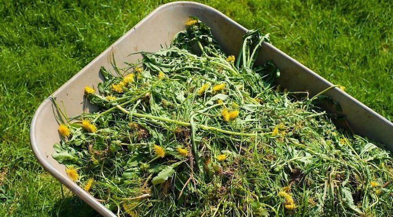 Как приготовить зеленое удобрение