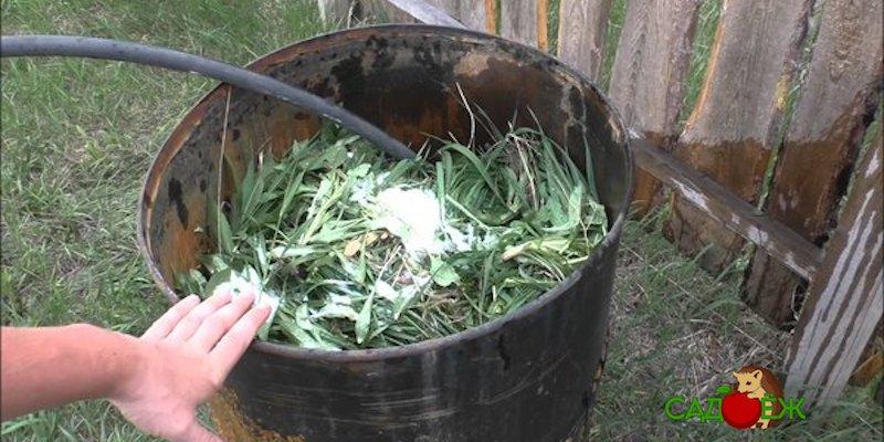 Как приготовить зеленое удобрение и для чего оно нужно?