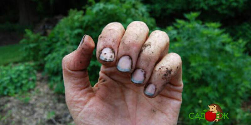 Что сделать, чтобы под ногти не забивалась земля при работе в огороде