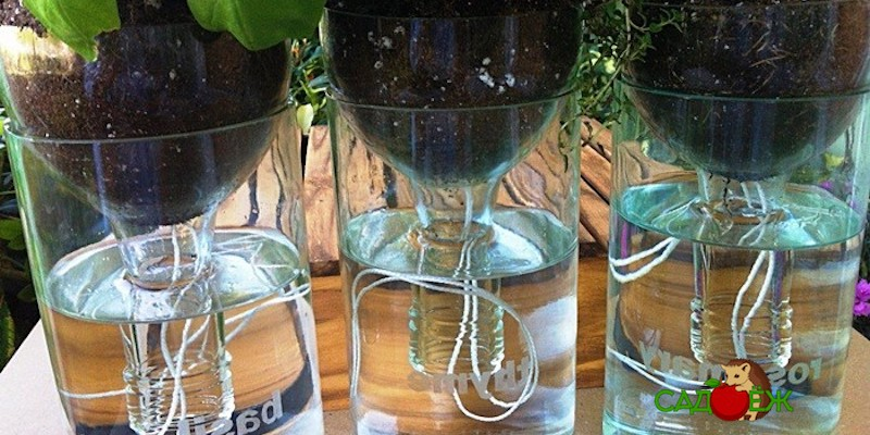 Поделки из пластиковых бутылок для сада и огорода: часть 2