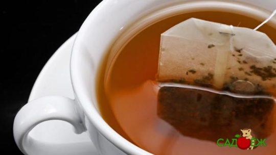 Подкормка комнатных растений чаем