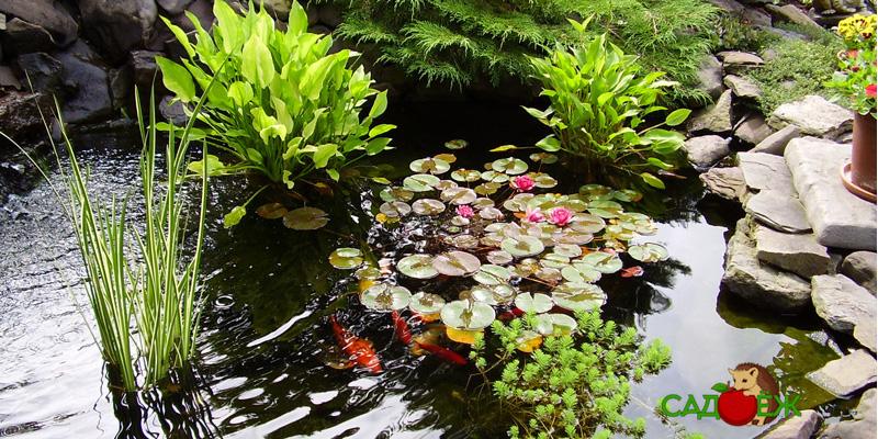 Растения для пруда на дачном участке