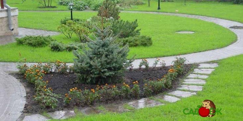 Можно ли новогоднюю елку посадить в огород?