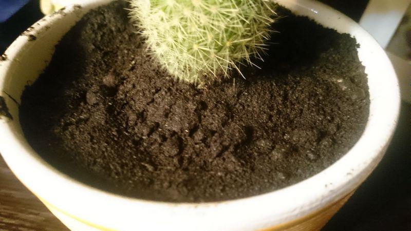 Какой грунт выбрать для кактуса
