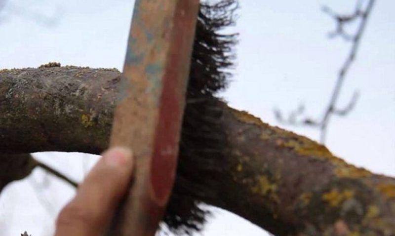 Как избавиться от лишайника механическим способом