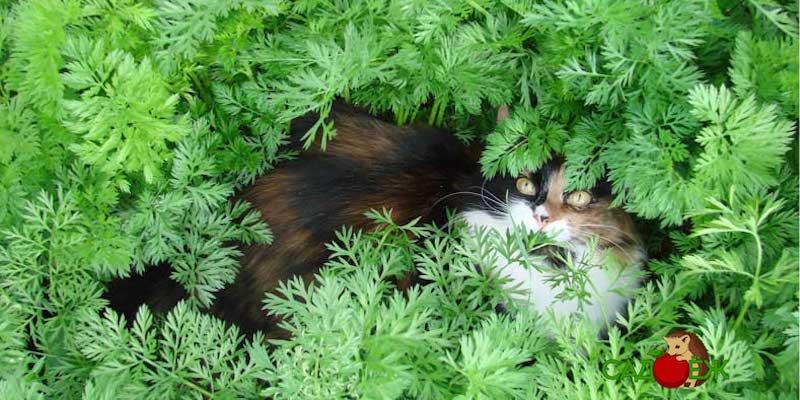 Как защитить грядки от кошек?