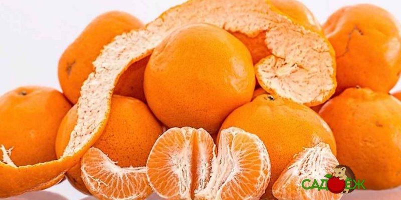 Как использовать мандариновую кожуру для огорода?