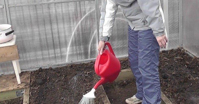 Обработка почвы кипятком против нематоды
