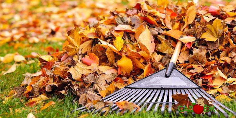 Убирать или оставлять опавшие листья на огороде?