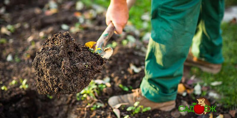 Перекопка огорода осенью: что делать нельзя