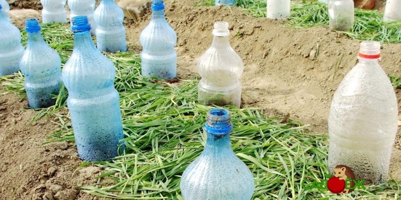 Использование пластиковых бутылок в саду и огороде: часть 1