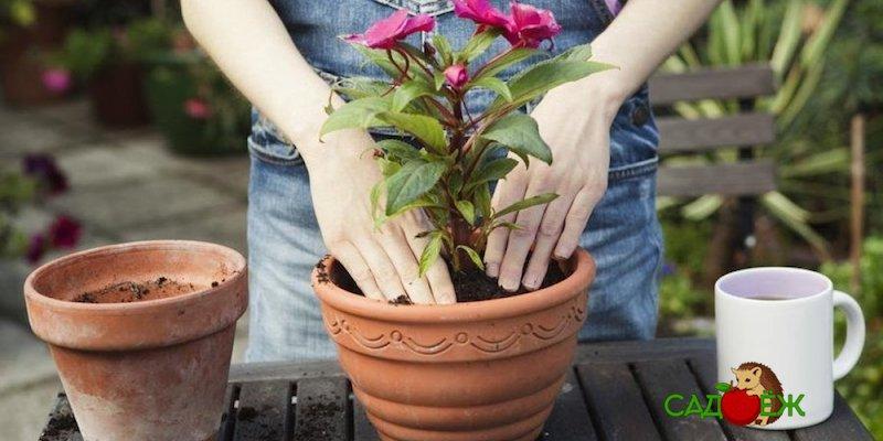 Можно ли пересаживать комнатные цветы зимой?