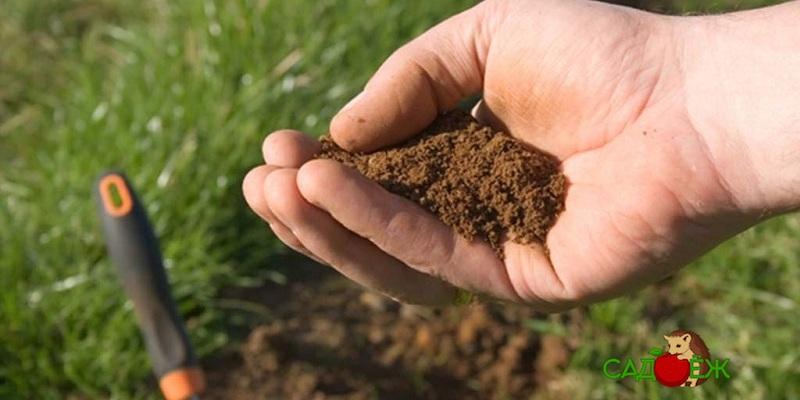 Почему закисляется почва?