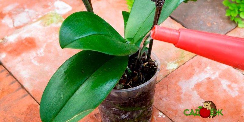 7 ошибок при выращивании орхидеи