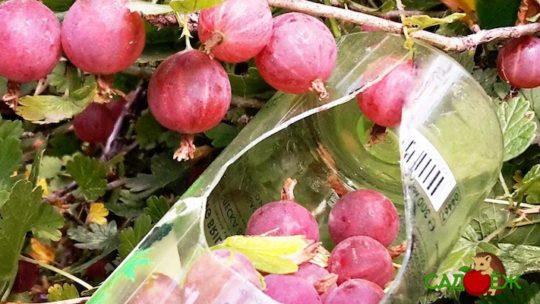 Комбайн для сбора ягод и фруктов из пластиковой бутылки своими руками
