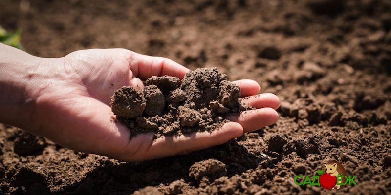 Как сделать почву на огороде рыхлой и мягкой?