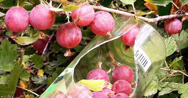 Приспособление для сбора ягод и фруктов