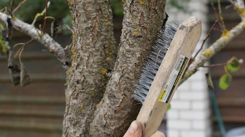 Удаление мха и лишайников с дерева